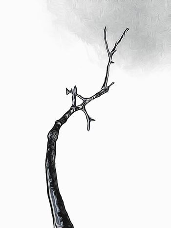 Lonely branch Tree Blackandwhite Branch Beauty In Nature Black And White Nature Outdoors Black & White Skye Cartoon Effect  Nature