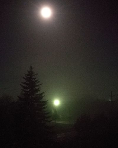 Fog Black Friday Two Moons 1Q84 Night Moon Illuminated Nature Silhouette Winter Moonlight Tree Space Cold Temperature Outdoors