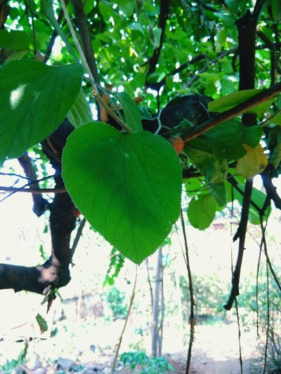 Tree Leaf Green Color Nature Growth Animal Wildlife Branch Plant Outdoors Freshness Close-up Beauty In Nature