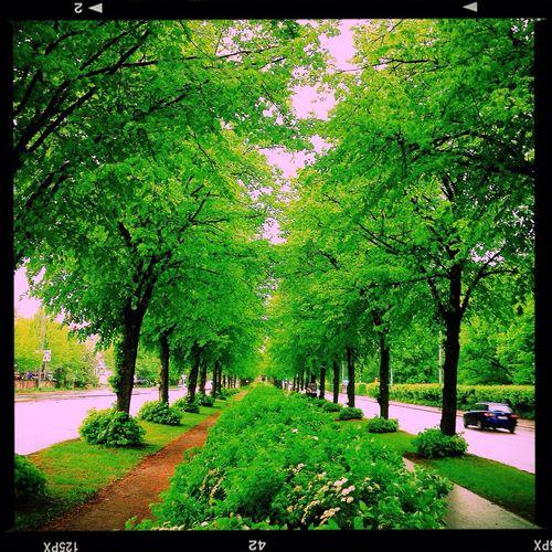 My home town, so green. I love it Käpylä Helsinki Green Enjoying Life