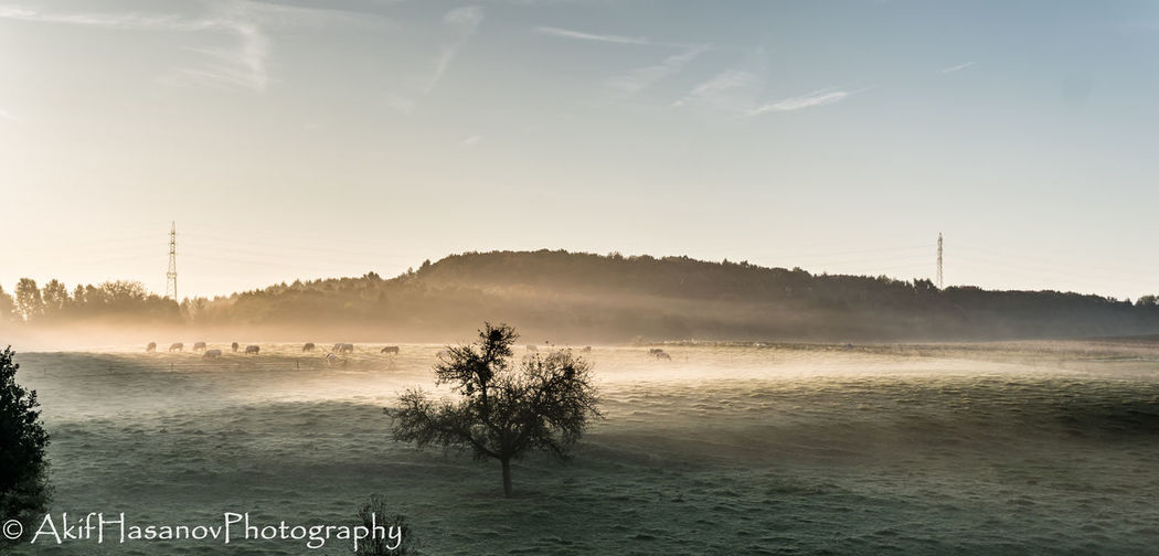 Court-Saint-Etienne, Belgium Beauty In Nature Fog Landscape Nature No People Sky Sunrise Tranquil Scene Tranquility Tree