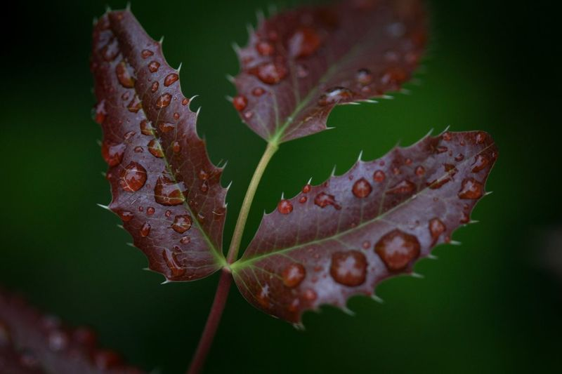 Beauty in Nature Plant Plant Part Leaf Growth Close-up Nature Beauty In Nature Focus On Foreground No People Day Autumn Change Vulnerability  Outdoors Fragility Tranquility Leaf Vein Selective Focus Brown Plant Stem