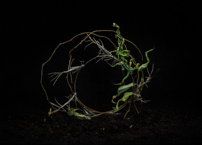 Close-up of plant on field against black background