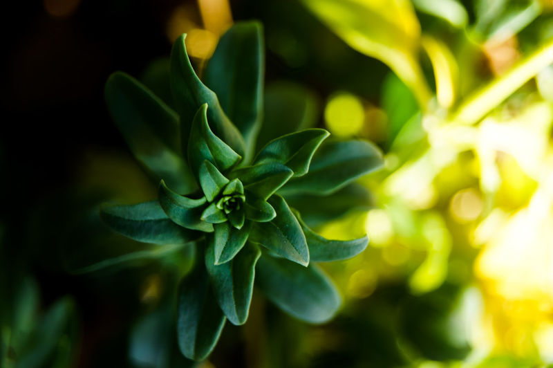 These light conditions were perfect! Focus Object Light Plants Plants 🌱 Beauty In Nature Beauty In Nature Close-up Day Focus On Foreground Fragility Freshness Green Color Growth Light And Shadow Light In The Darkness Nature No People Outdoors Plant Shutter Spiral