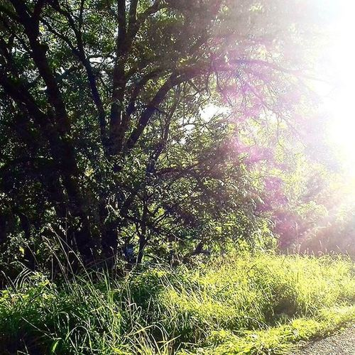 River Mersey. Sun flare while walking along the path. Beautiful Path River View Beauty In Nature Day Forest Grass Growth Landscape Leaves Nature No People Outdoors Outside Pretty Scenics Sunflares Sunlight Tranquil Scene Tranquility Tree First Eyeem Photo