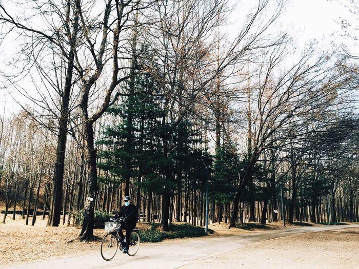 Korea Seoul Forest Winter