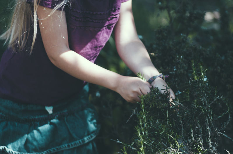 Midsection Of Girl Picking Herbs