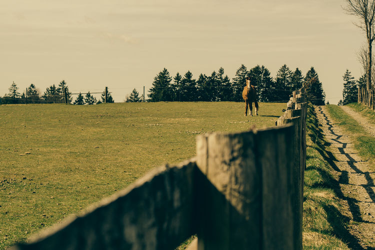 Close-up of wooden fence with horse standing at distant