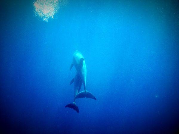 Delphins Beautiful Nature Unterwasserliebe Ozean Unterwasserwelt Delphin Delphiniums Portrait Portrait Photography EyeEm Gallery Colorphotography Color Photography Nature Photography EyeEm Nature Lover Nature_collection Ägypten Red Sea