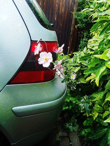 Saw it and had to take a photo Cars Transportation Flowers Flowers,Plants & Garden Drive Way Nature Pink Plants Flower No People Nature Day Fragility Close-up Outdoors Freshness Growth Water Flower Head Rain The Week On EyeEm Green Fence Nature And Machine Perspectives On Nature Mobility In Mega Cities Summer Exploratorium The Still Life Photographer - 2018 EyeEm Awards