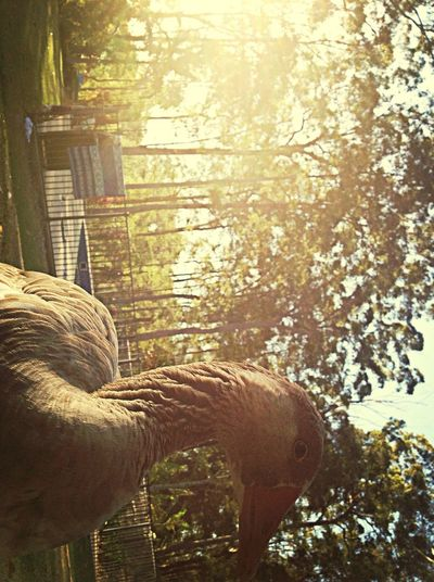 Having a great time with Pepper Escaping Enjoying The Sun Relaxing First Eyeem Photo