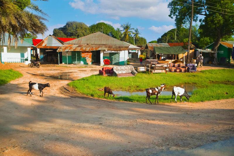 Cows grazing in a farm
