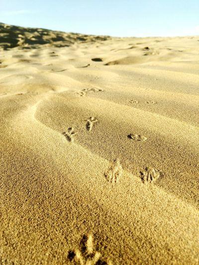 Creatures Of Desert Sand Dune Crawling Footprints