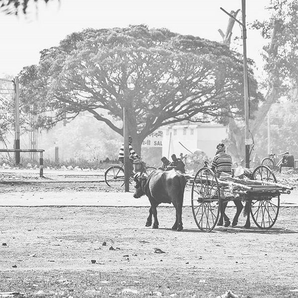 Old ways Picoftheday Photooftheday Photos Storiesofindia Happiness Indianess Nature Nikon_photography_ Nikon Insta_mazing Nikon Focus Indiapictures _soi Bw_photooftheday Cart
