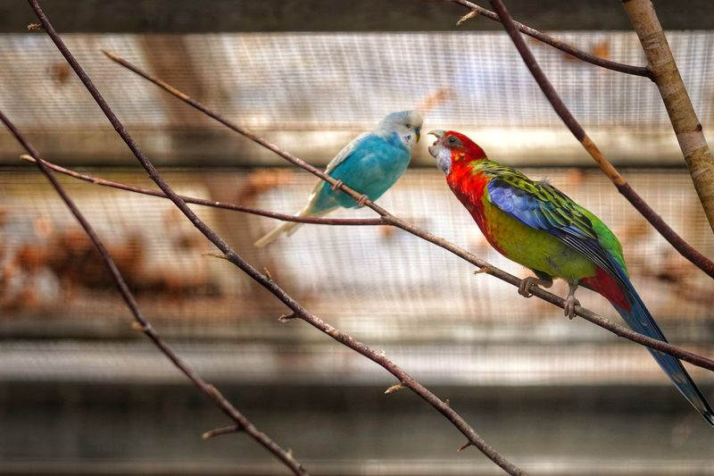 Close-up of parrot perching on tree in cage