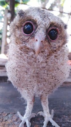 Bird Portrait Looking At Camera Close-up