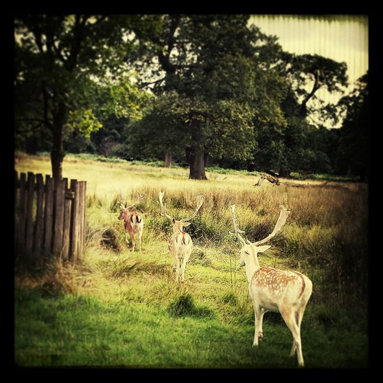 Deer Sanctuary Nature Enjoying Life