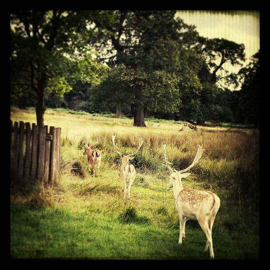 Deer Sanctuary Nature Enjoying Life