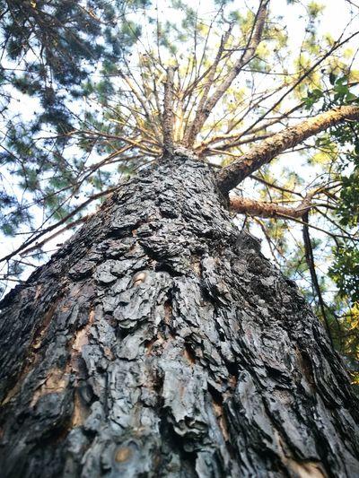 Chiang Mai   Thailand DoiAngKhang,Fang,ChiangMai Nature Nature_collection Winter Winter Trees