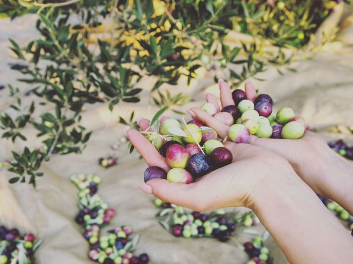 Cropped Hands Holding Berries