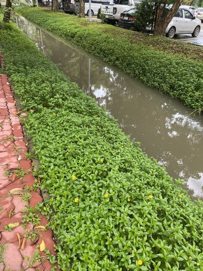 High angle view of plants growing by canal
