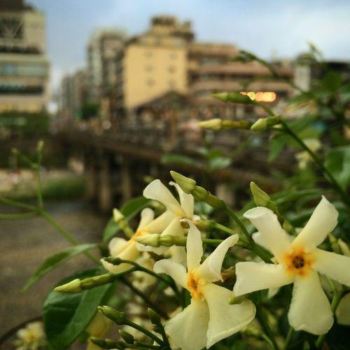 #春の古都#小さな花も#誇らしげ #久しぶり の#京都#やっぱり良いです#今度また#ゆっくり来たい#です