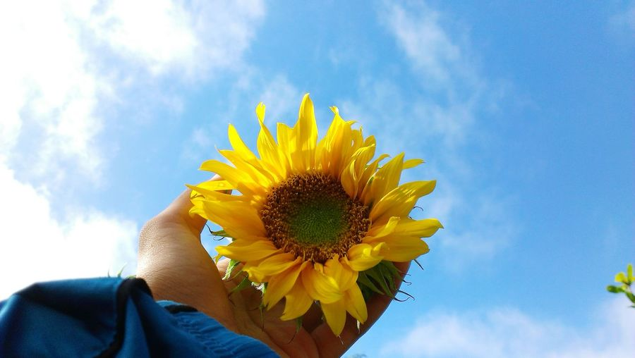 Low section of woman against sunflower against sky