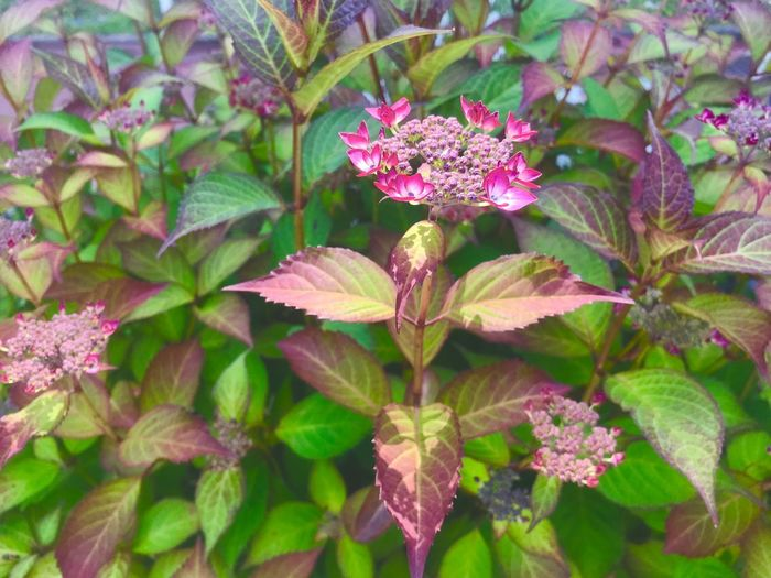 Plant Flower Flowering Plant Leaf Plant Part Growth Beauty In Nature