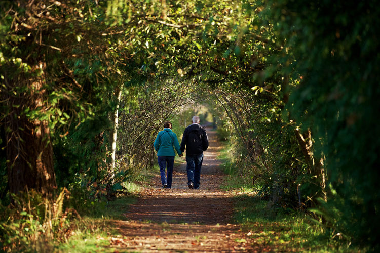 Rear view of couple holding hands amidst trees on walkway