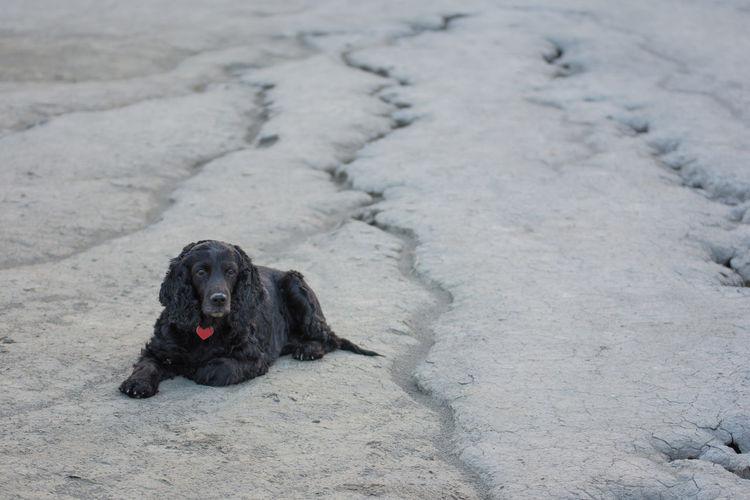 High angle view of black dog on land