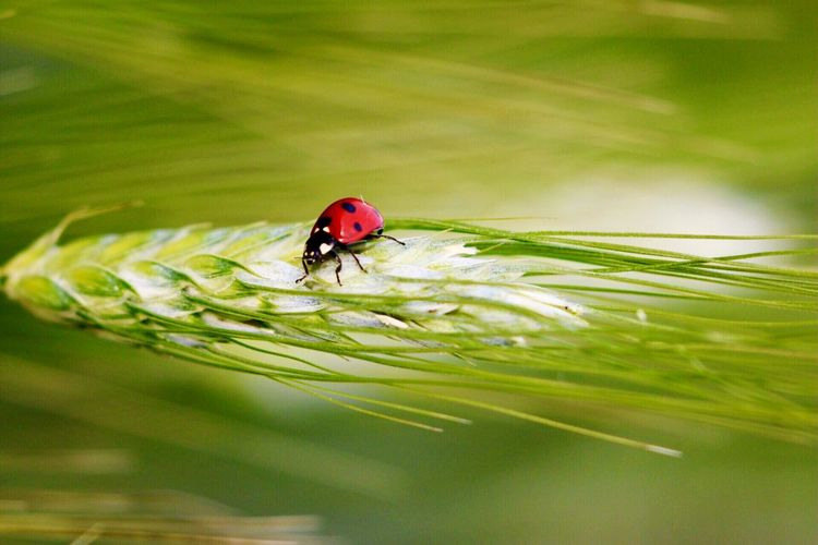Insect Nature Green Color No People Beauty In Nature Animal Themes