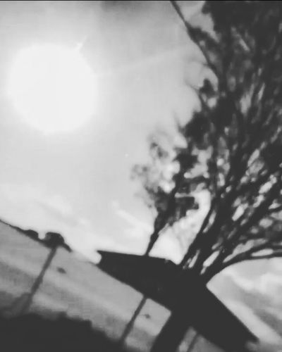 No People Day Outdoors Nature Sky Tree Lens Flare Tree Sun Sunbeam Sunlight Black And White Photography Blackandwhitephotography Blackandwhite Pixelated Blurry On Purpose Blurry Trees Blurred Perspective