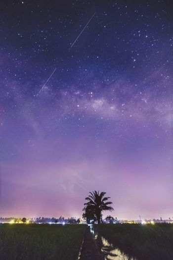 Dream Milkyway Shooting Stars Night Malaysia Travel ASIA Country Asdgraphy Photography Sony Sonyalphauniverse Sonya6000 Sonyimages Malaysiaphotographer Sony A6000 Alphauniverse Sonyalpha Astronomy Galaxy Space Milky Way Star - Space Tree Constellation Purple Sky Landscape Space And Astronomy Infinity Calm Summer Exploratorium