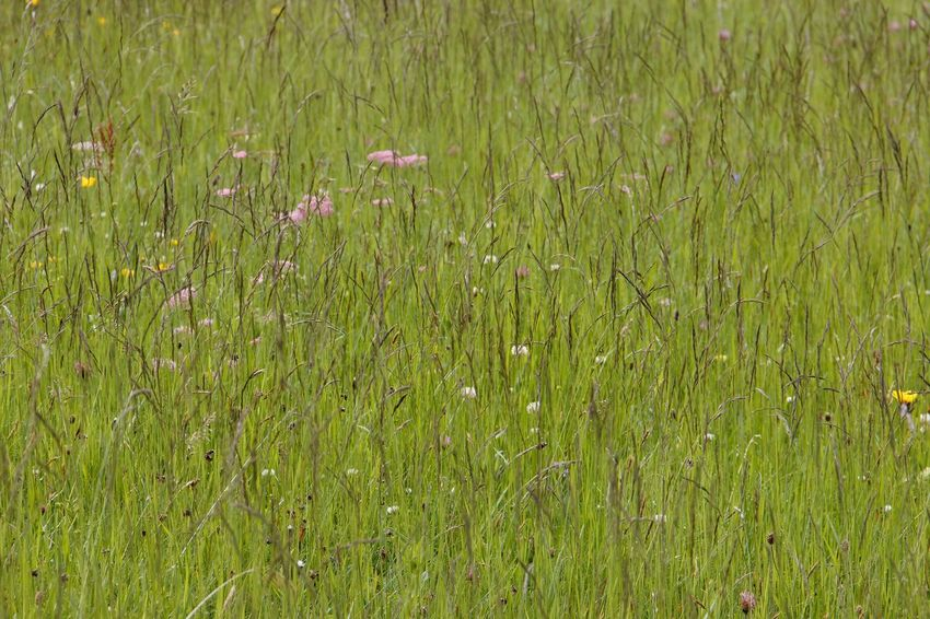 Beauty In Nature Day Field Flower Grass Green Color Growth Nature No People Outdoors Plant Tranquility