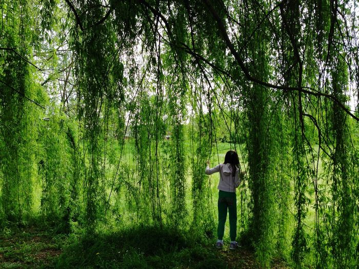 Rear view of woman looking through weeping willow