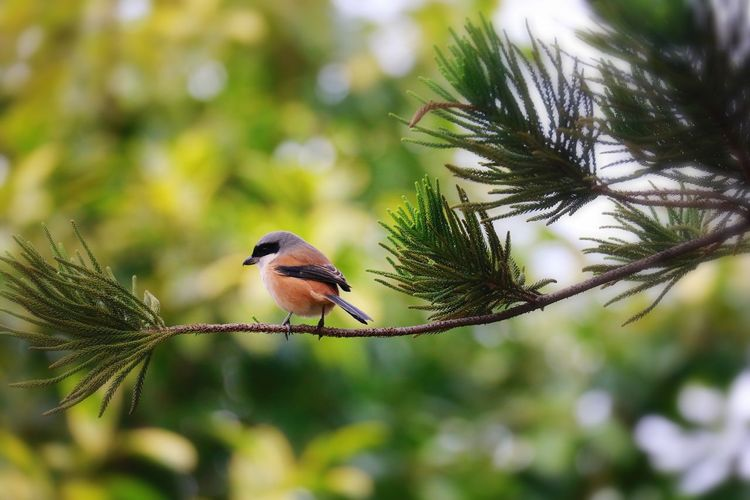 Animal Wildlife Bird Animal Themes Animals In The Wild Animal Vertebrate Focus On Foreground Tree One Animal Perching Plant Nature Beauty In Nature No People Branch Day Close-up Outdoors Selective Focus Songbird