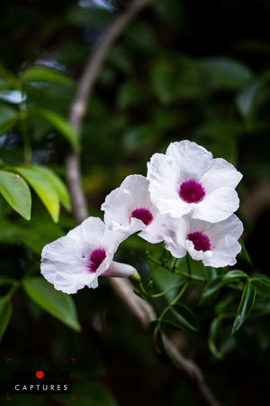 Beauty In Nature Blooming Blossom Close-up Day Flower Flower Head Focus On Foreground Fragility Freshness Growth In Bloom Leaf Nature Outdoors Park - Man Made Space Petal Pink Color Plant White Color