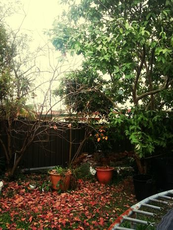 I leave for 3 days and when I'm back my favorite tree sheds all of its leaves. Winter really is coming :'(