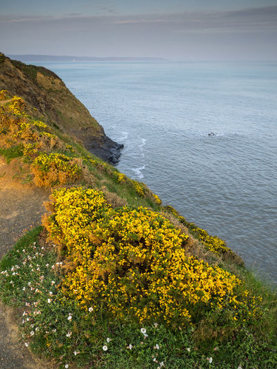 Beautiful wild gorse along the south west coast path at sunrise on the North Devon coastline of England. Water Beauty In Nature Sea Scenics - Nature Plant Tranquility Yellow Tranquil Scene Nature Land Flower No People Flowering Plant Growth Sky Beach Day Idyllic Non-urban Scene Outdoors Horizon Over Water Coast Westward Ho! North Devon England Devon Coast Gorse Ocean Sea View South West Coast Path Scenic View Sunrise Coastal Feature Coastline Seascape Landscape Bideford Bay Bideford Devon Hiking Nature Rugged Sea Cliff