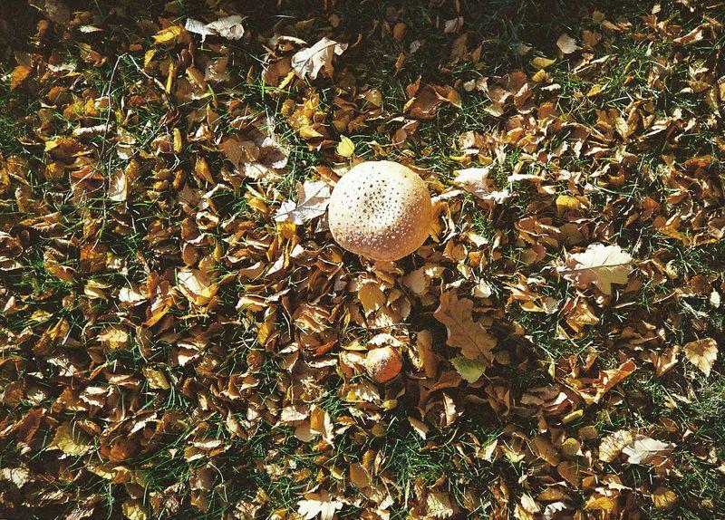 Mushrooms Mushrooms 🍄🍄 Mushroom_pictures Mushroomphotography Mushrooms Growing Wild Wild Mushrooms Autumn Colors Autumn🍁🍁🍁 Autumn Collection Autumn Flyagaric