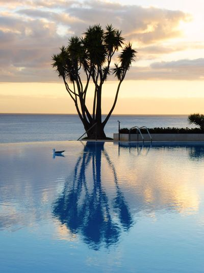 Seagull Swimming In Pool With Tree Reflection Against Sky