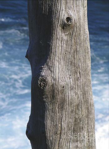 L'île de la Réunion (Bourbon island) - Mascareignes/Indian Ocean/France. Beauty In Nature Day Indian Ocean Mascareignes Nature No People Ocean Indien One Animal Outdoors Sky Swimming Tree Tree Trunk Water Waves Île De La Réunion  Île De La Réunion ❤️