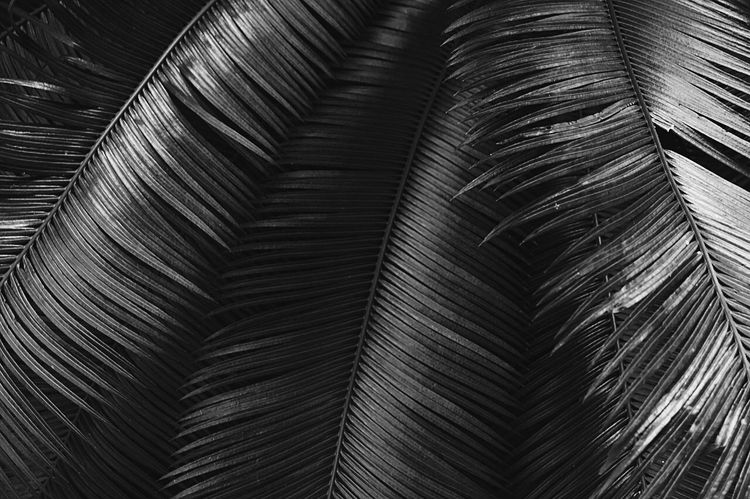 Close-up Backgrounds Abstract Pattern Full Frame Blackandwhite Tree Trunk Back Lit Black And White Taking Photos Blackandwhite Photography Eyeemphoto Black & White Repetition Diminishing Perspective Extreme Close-up Intricacy Geometric Shape Concentric Patterned Curve Designed Modern Structure Extreme Close Up