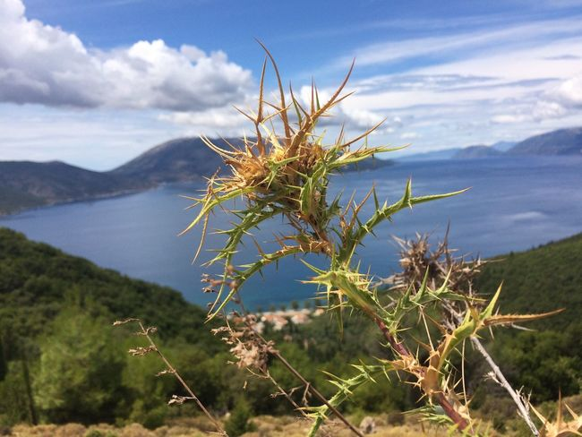 Sami Cefalonia Grecia Nature Growth Plant Beauty In Nature Tranquility No People Mountain Scenics Outdoors Tranquil Scene Day Focus On Foreground Sky Close-up Water Femalephotographerofthemonth 43GoldenMoments Popular Photos Taking Photos Nature Travel Grass