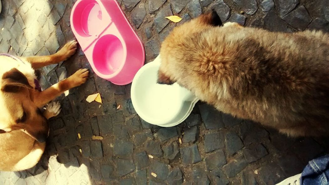 Dog Pets Domestic Animals High Angle View Animal Themes Tranquility Fresh On Eyeem
