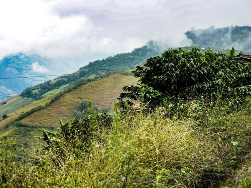 Paisaje Cultural Cafetero Agriculture Nature Growth Field Landscape Cloud - Sky Outdoors