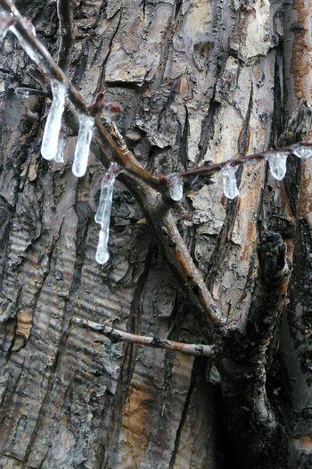 Bark Tree Tree