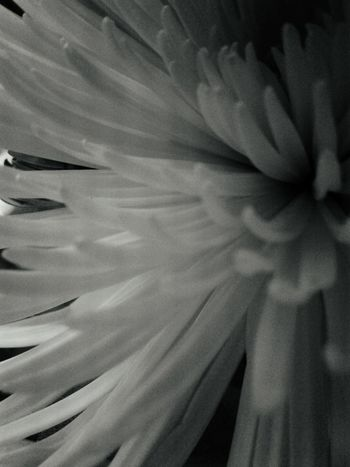 Abstract Backgrounds Textured  Pattern No People Flower Close-up Day Bloom Delicate Supple Blooming Fragility Plants And Garden Beauty In Nature Nature Springtime Growth Freshness Black And White Common Objects EyeEmNewHere