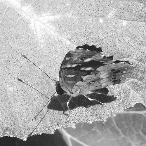 Silhouette Blackandwhite White&Black Nature Eye4photography  Eyem Nature Lover
