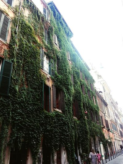 Roma Rome Architecture Building Exterior Low Angle View House Built Structure Outdoors Growth Nature City City Life EyeEm Selects Roma Caput Mundi Beauty In Nature My Own Photography City Moving Around Rome